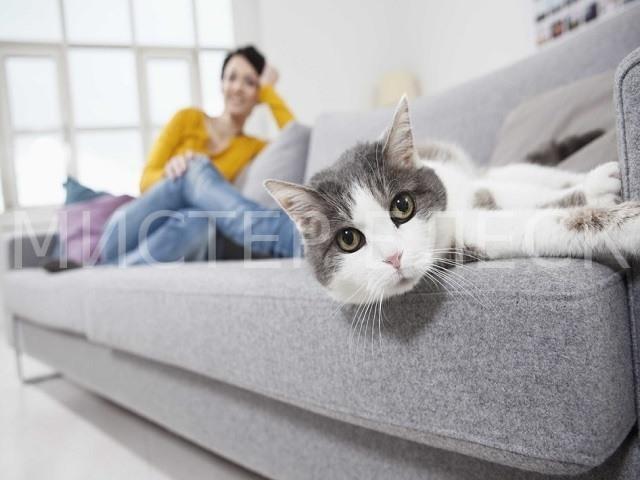 чем почистить мягкую мебель в домашних условиях
