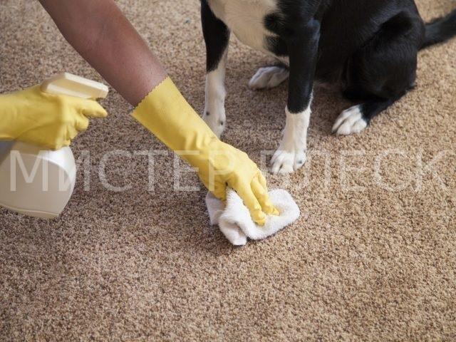 как убрать запах мочи собаки с ковра